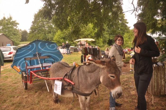 Balade avec les ânes en calèche
