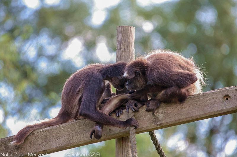 Vie des signes au zoo de mervent proche du camping