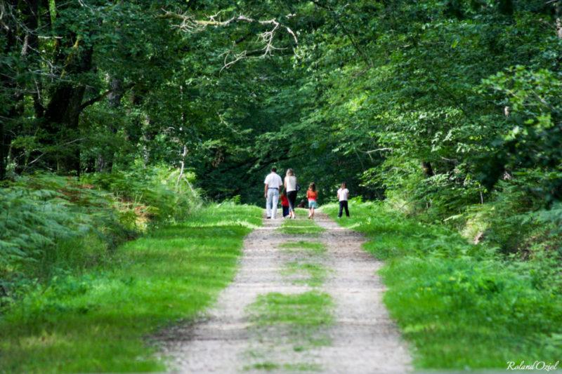 Chemins forestiers forêt de Mervent