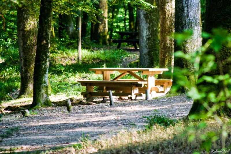 Table pour pique-niquer dans la forêt de Mervent