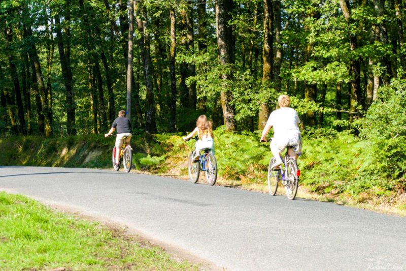 Balade à vélo dans la forêt de Mervent au long des pistes cyclables