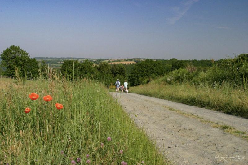 La campagne à chantonnay à proximité du camping des Rulières ouvert à l'année