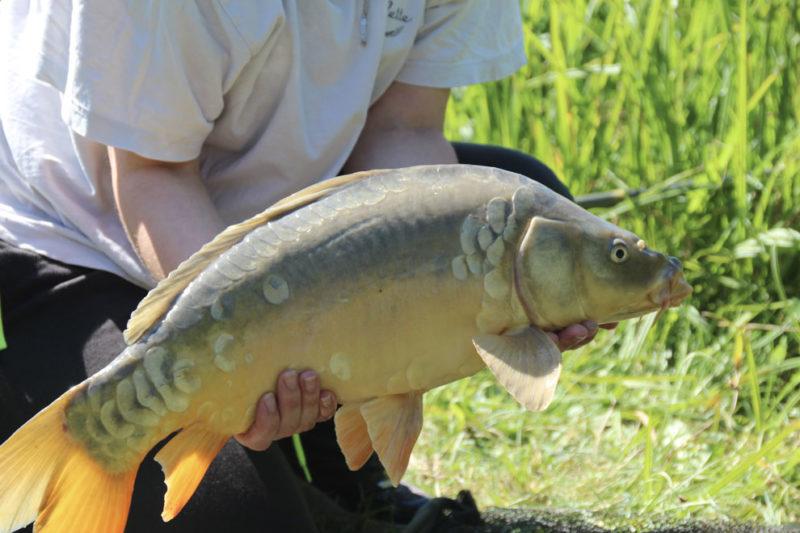 Pêche à la carpe dans un camping avec étang privé